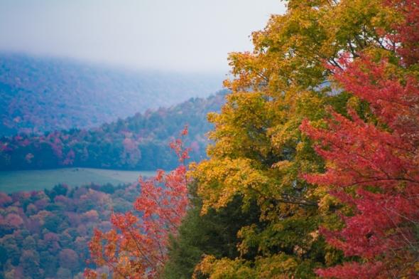 Fall2014-2424