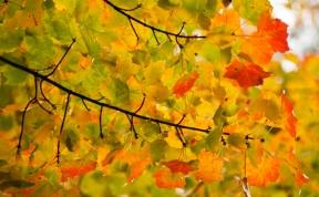 Fall2014-2428