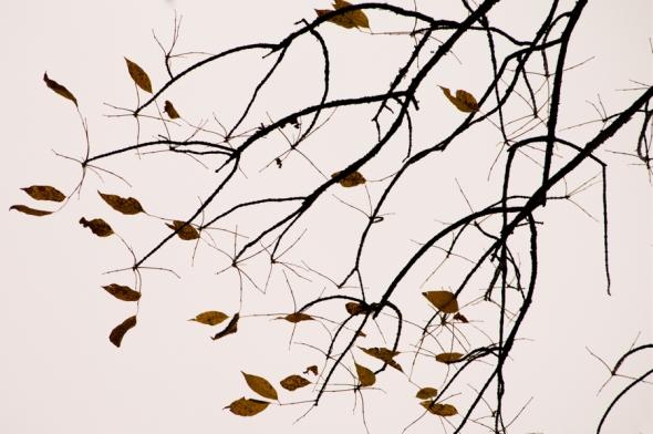Fall2014-2444