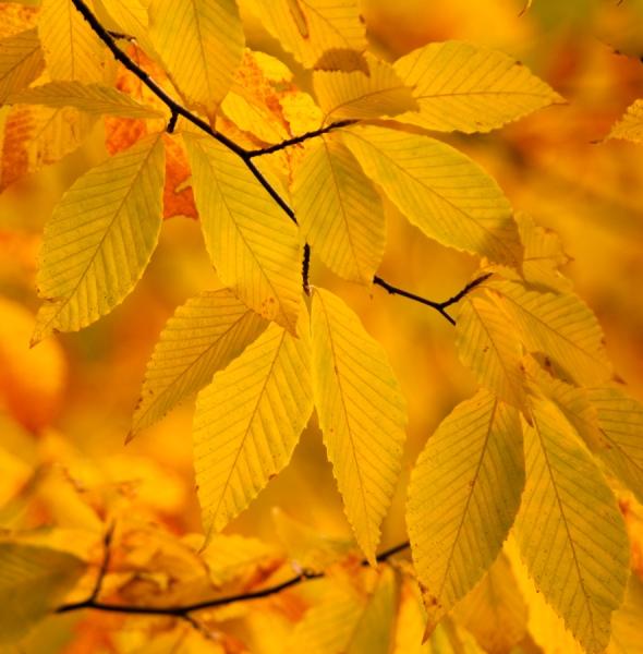 Fall2014-2456