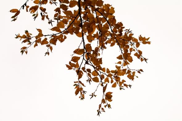 Fall2014-2471