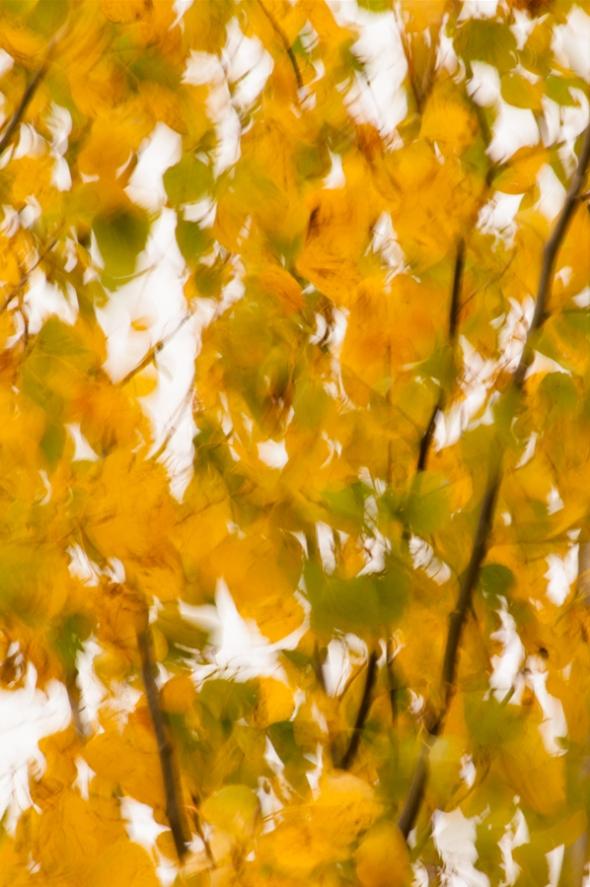 Fall2014-2562