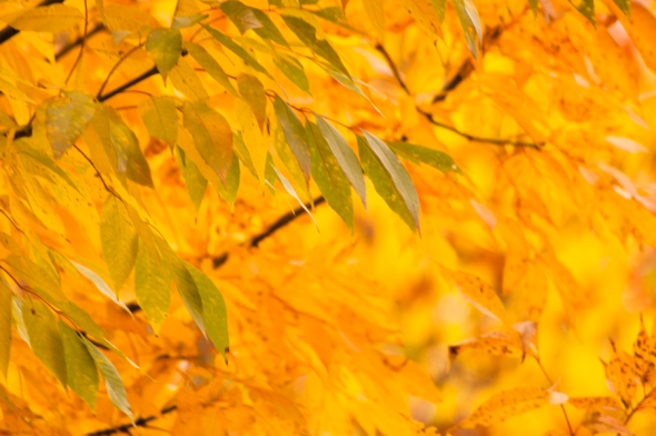 Fall2014-2568