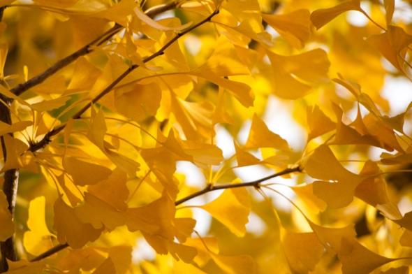 Leaves-2989