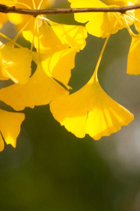 Leaves-2991