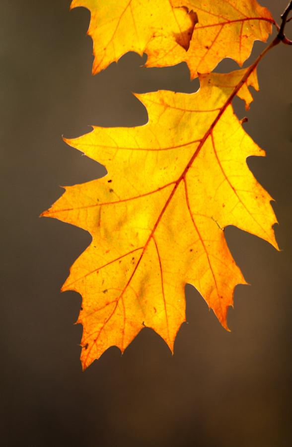 Leaf-3165