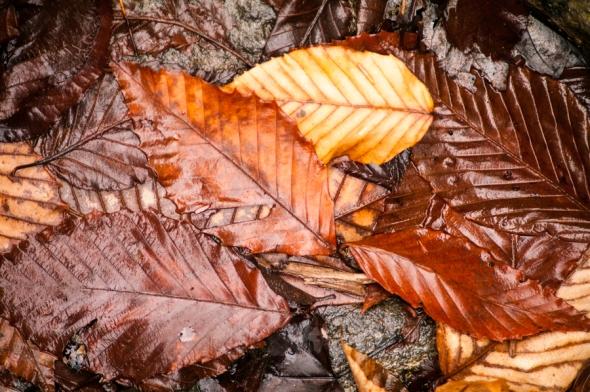 Leaves-3377
