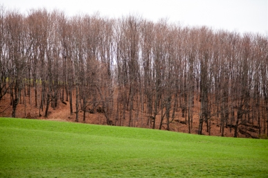 A newly planted hay field contrasts with the sugar woods now asleep for the winter.