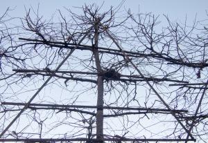 Tree-2270