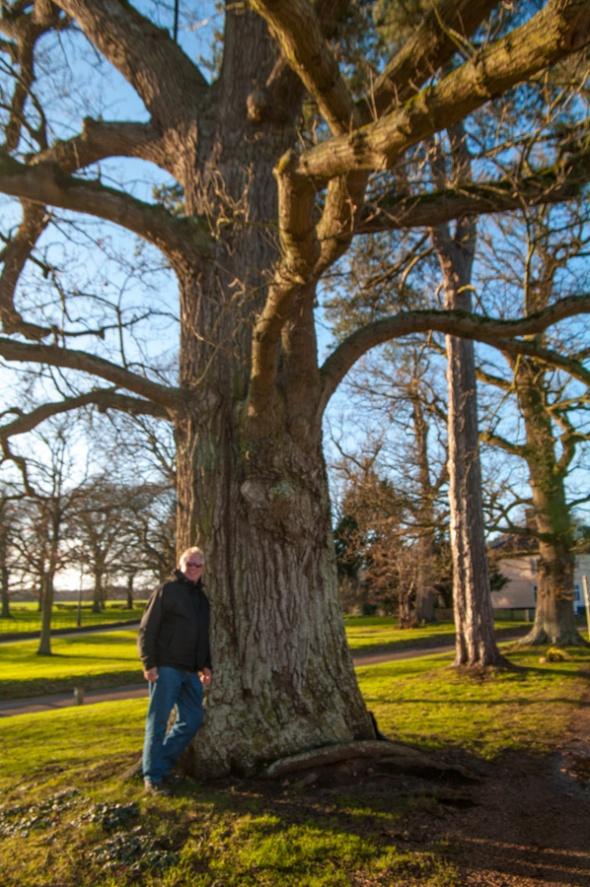 Tree-7167