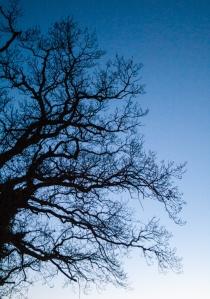 Tree-7212
