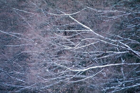 Trees-3552
