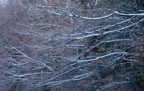 Trees-3553