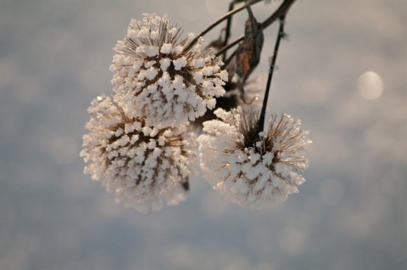 Snow-4056