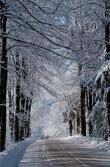 Snow-4089