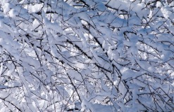 Snow-4129