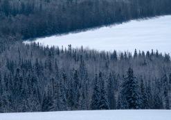 Snow-4131