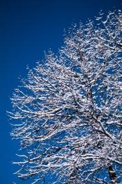 Snow-4181