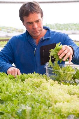 David Hartshorn harvests greens