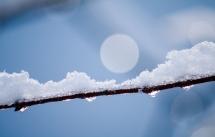 Snow-4334