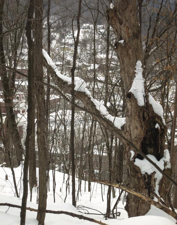 Tree-2591