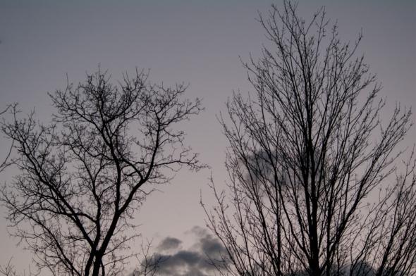 Tree-8644