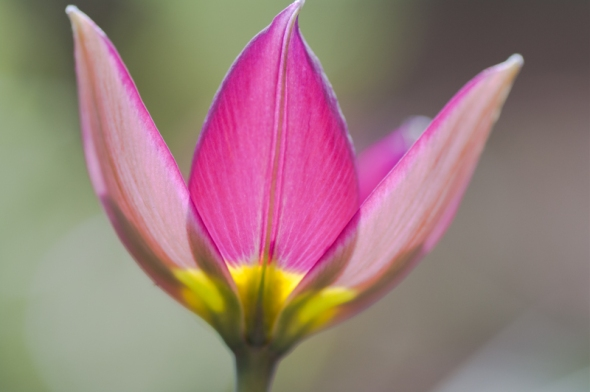 Flowers-5488