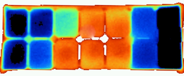 $20 6x13 Thermal image of ice cube tray
