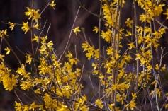 Spring-8936