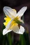 Spring-8939