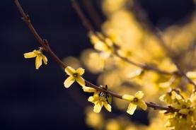 Spring-8948