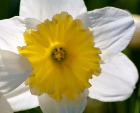 Spring-8950