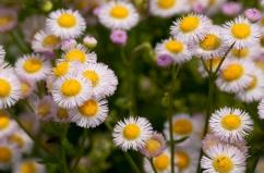 Flower-0467