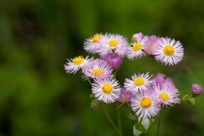 Flower-0468
