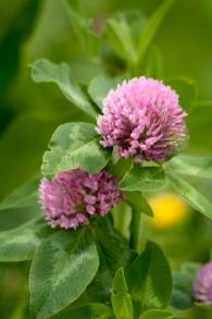 Flower-0473