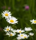 Flower-0525