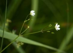 Flower-0531