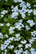 Flower-0543