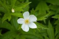 Flower-0566