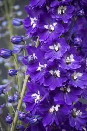 flower-1026