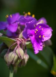 flower-1597