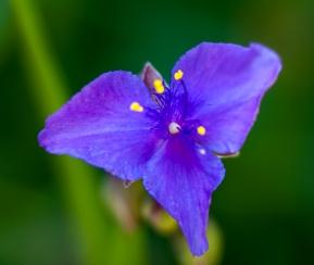flower-1607