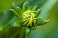 flower-1632