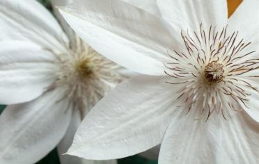 Flowers-1410