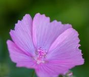 Flowers-1425
