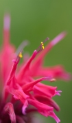 Flowers-1456