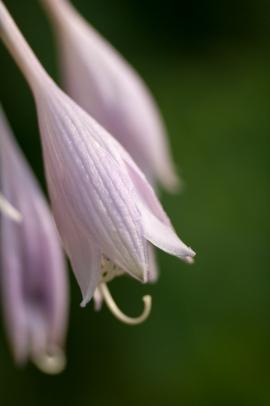 Flowers-1470