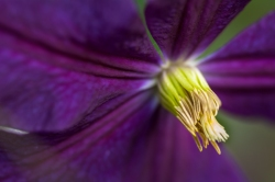 Flowers-1476