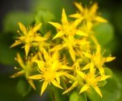 Flowers-1499