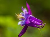 Flowers-1501